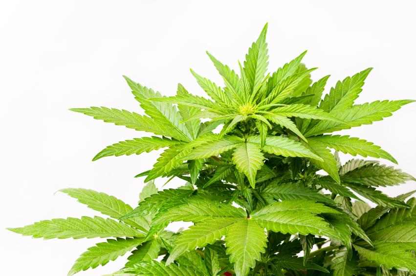 Q: Can HOAs ban Marijuana?