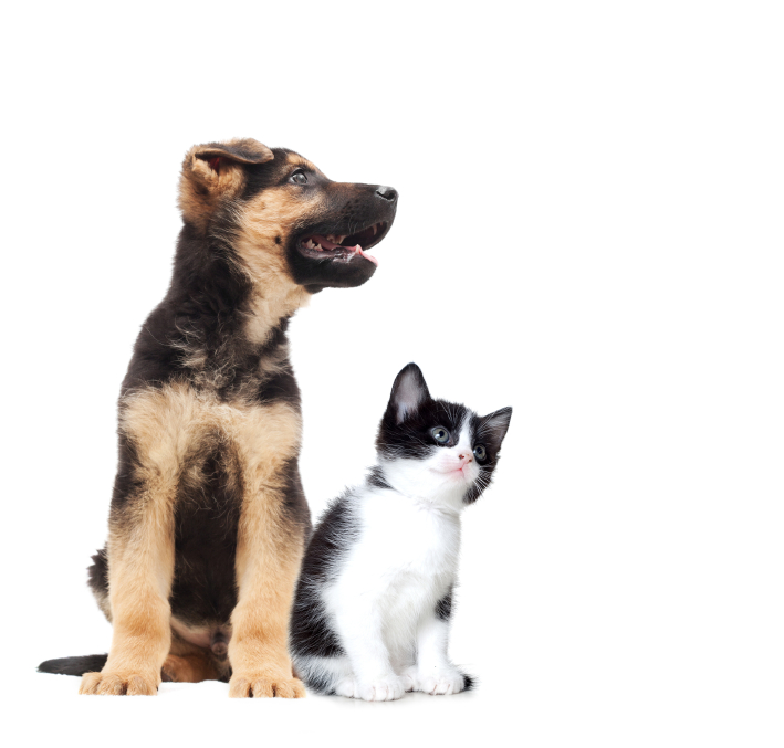 Q: Can HOAs evict pets?