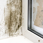 Q: What can I do about my mold problem?