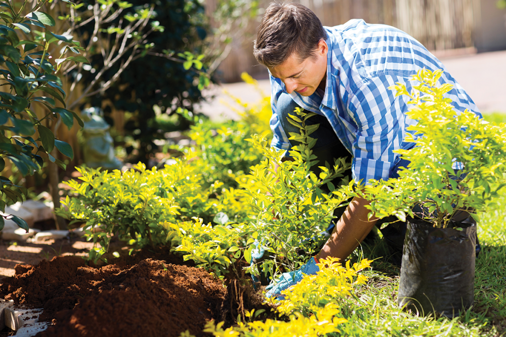 How to Plant Trees | All Property Management