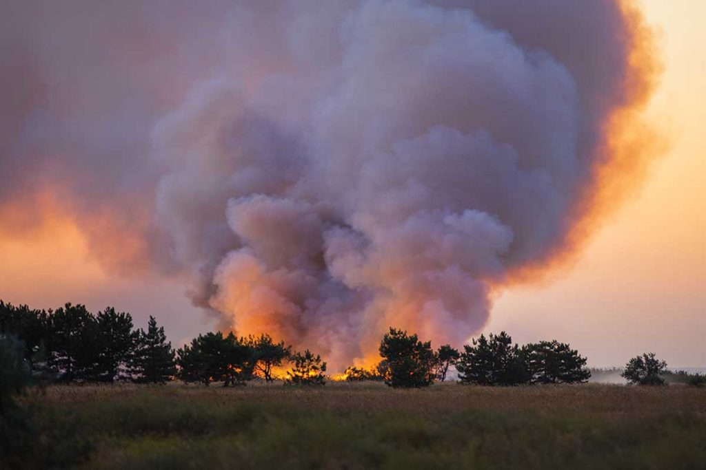 8 Wildfire Prevention Tips for All 50 States